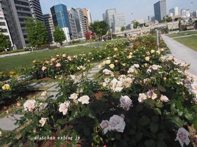 中之島公園の薔薇園2@大坂_e0406439_21185231.jpg