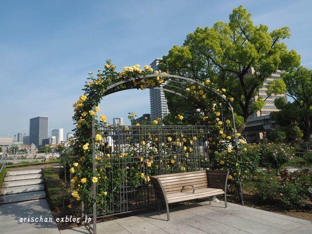 中之島公園の薔薇園2@大坂_e0406439_21330780.jpg