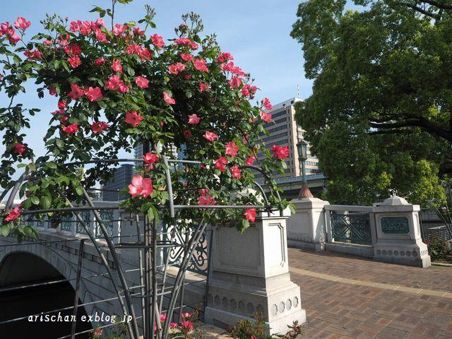 中之島公園の薔薇園2@大坂_e0406439_21385908.jpg