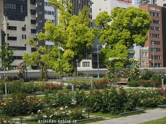 中之島公園の薔薇園2@大坂_e0406439_21412825.jpg