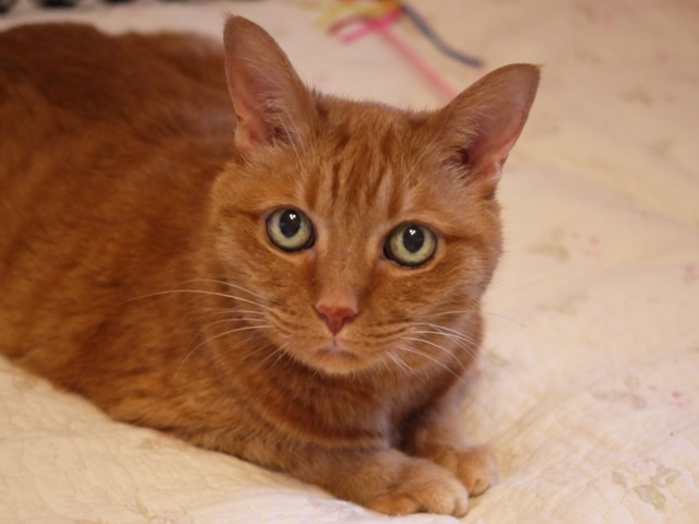 お誕生日猫 しぇる16歳編。_a0143140_23022326.jpg