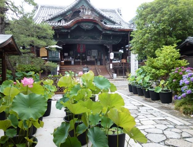 革堂さん(行願寺)のハス_e0230141_19531219.jpg