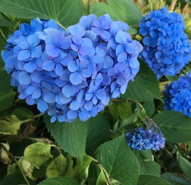 YOKOHAMA @山下公園 お天気に恵まれて♪_a0165160_17522262.jpg