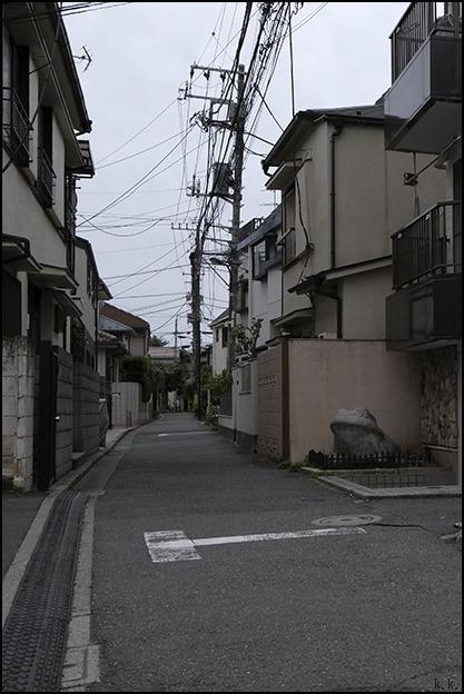 梅雨の晴れ間に近所を少し歩きました_a0031363_03143672.jpg