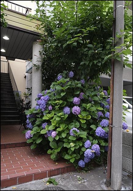 梅雨の晴れ間に近所を少し歩きました_a0031363_03150959.jpg