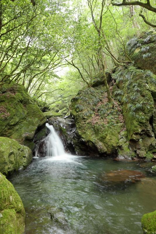 「鳥居杉」の後は、「瀬戸の滝」へ_a0077663_13042451.jpg