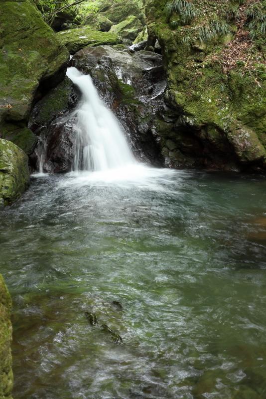 「鳥居杉」の後は、「瀬戸の滝」へ_a0077663_13042790.jpg