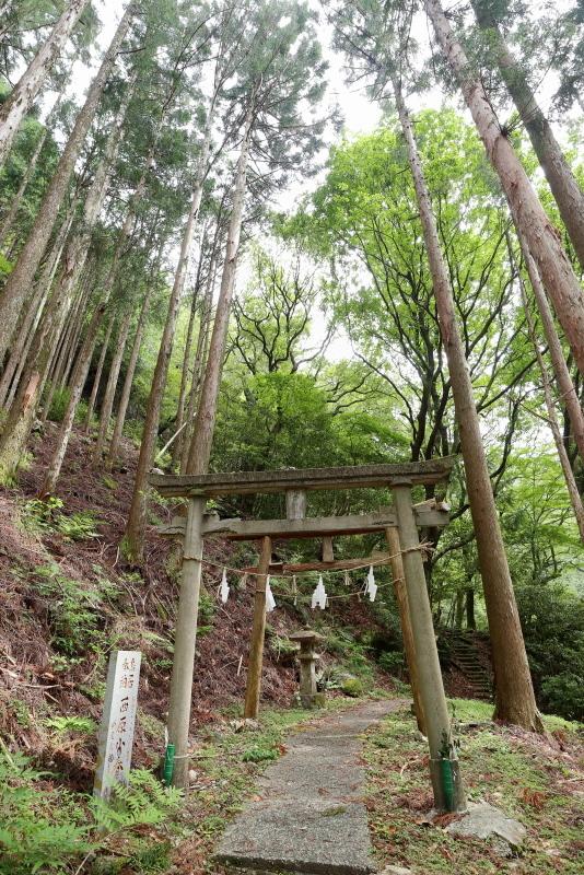 「鳥居杉」の後は、「瀬戸の滝」へ_a0077663_13044211.jpg