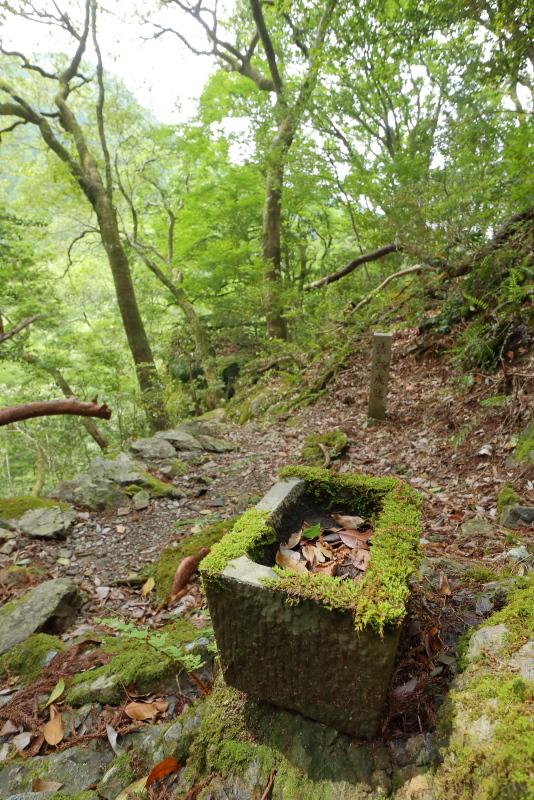 「鳥居杉」の後は、「瀬戸の滝」へ_a0077663_13045933.jpg