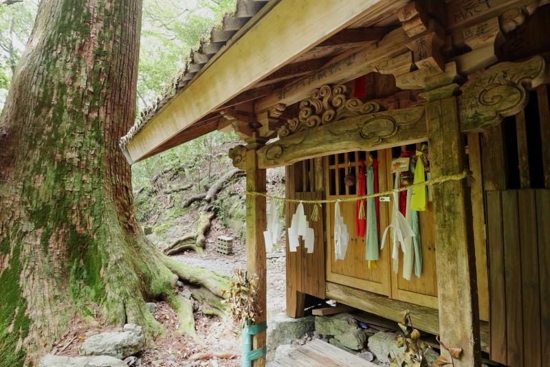 「鳥居杉」の後は、「瀬戸の滝」へ_a0077663_13050142.jpg