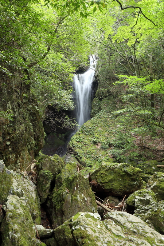 「鳥居杉」の後は、「瀬戸の滝」へ_a0077663_13105722.jpg