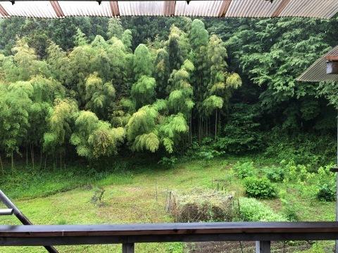 雨・雨・雨_d0073371_09215273.jpg
