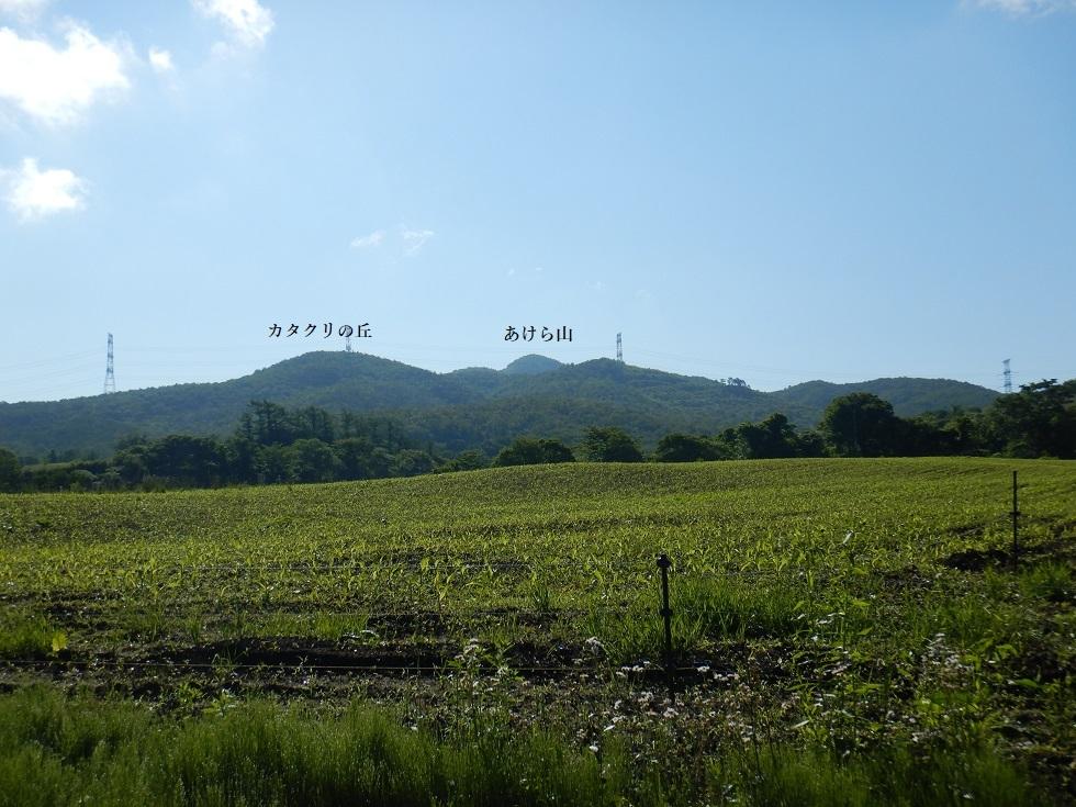 あけら山・青麻古道 ~ 2019年6月13日_f0170180_07583478.jpg