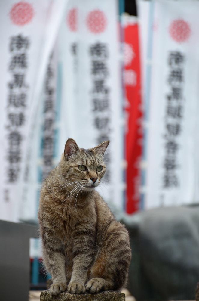 猫たちと戯れた日_f0159784_17010222.jpg