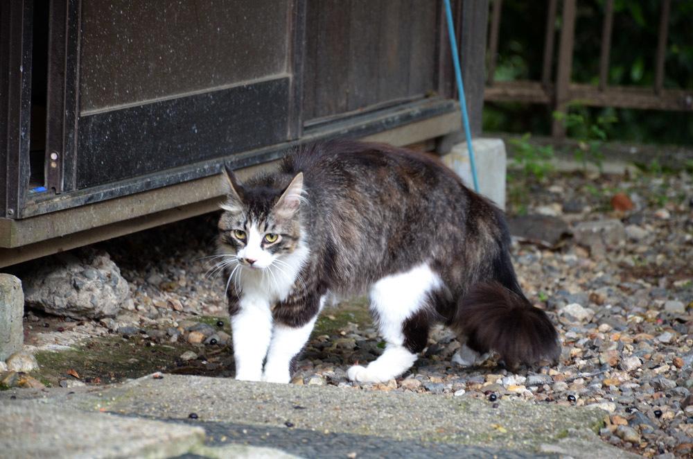 猫たちと戯れた日_f0159784_17010846.jpg