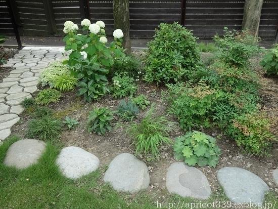 庭のアジサイと宿根草 1年前とのBEFORE→AFTER_c0293787_09463360.jpg