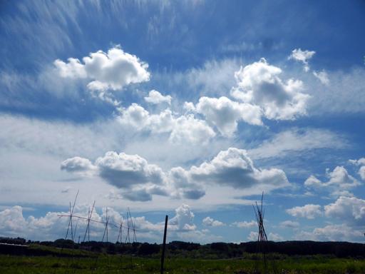 6月中旬の自然農畑、初収穫_d0366590_19240153.jpg