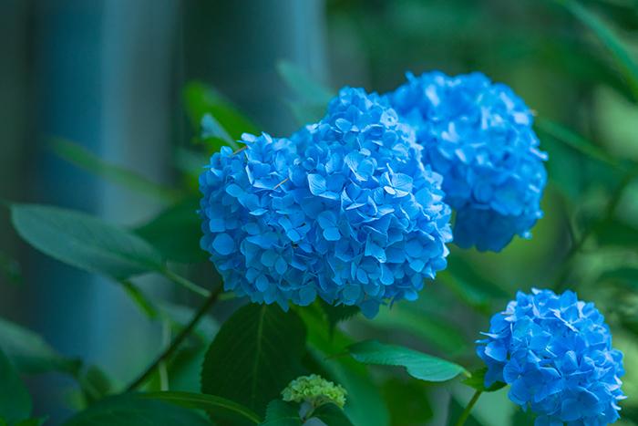 b0145398_20102057.jpg