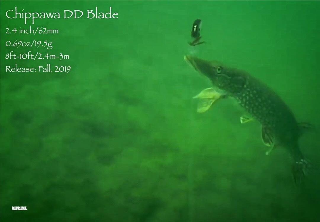 水中動画 【チッパワくんの大冒険】_d0145899_19513828.jpeg