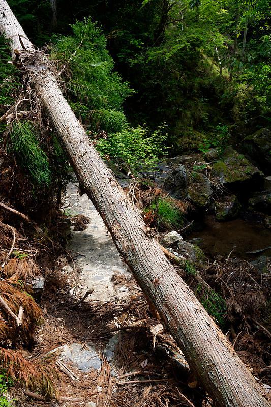 滝巡り@中川 菩提の滝。_f0032011_21544863.jpg