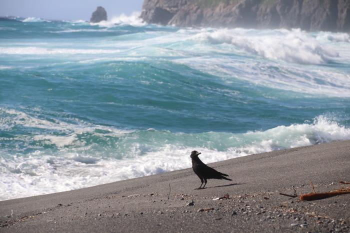 海に飛ぶ_e0023517_17154588.jpg