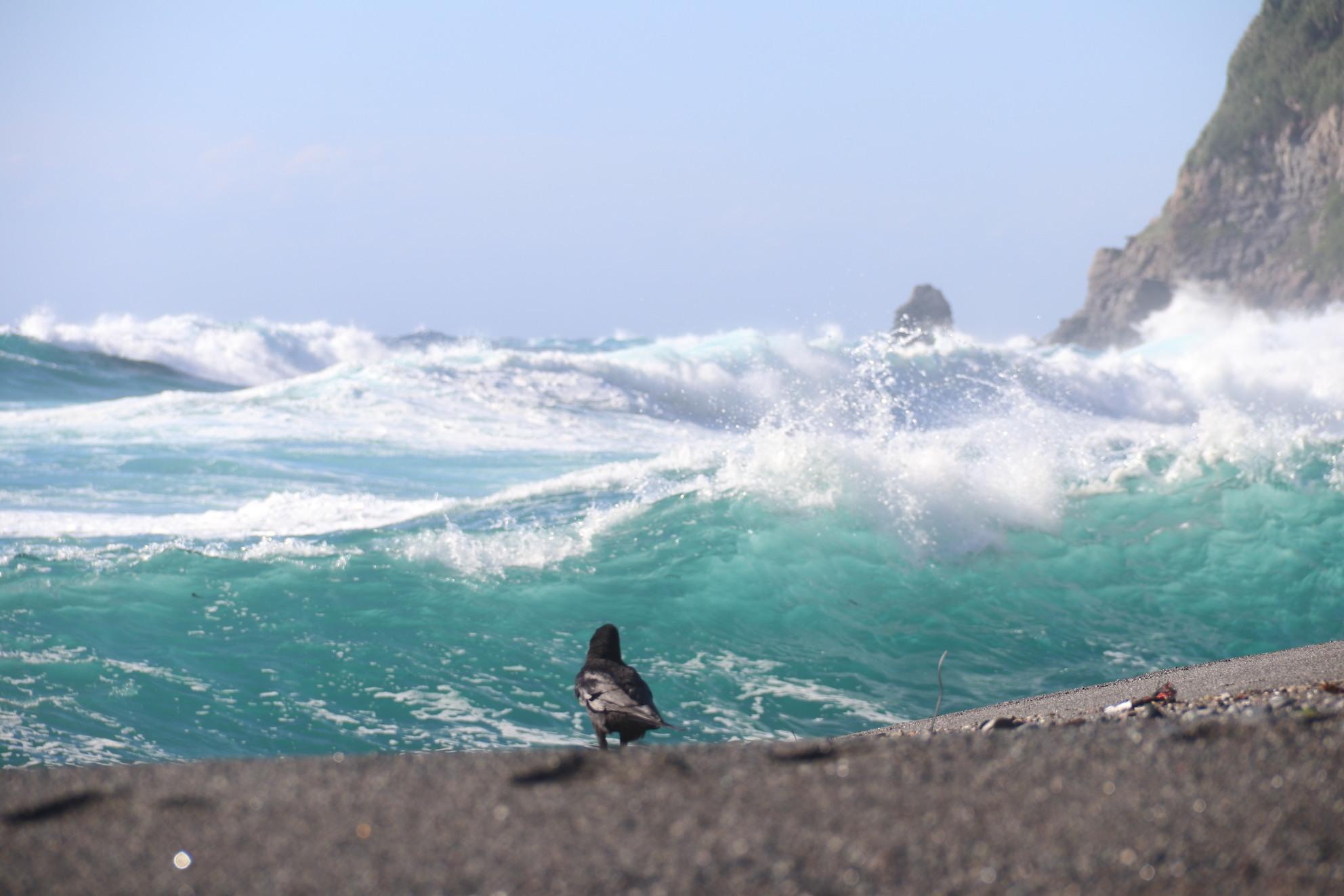 海に飛ぶ_e0023517_17173115.jpg