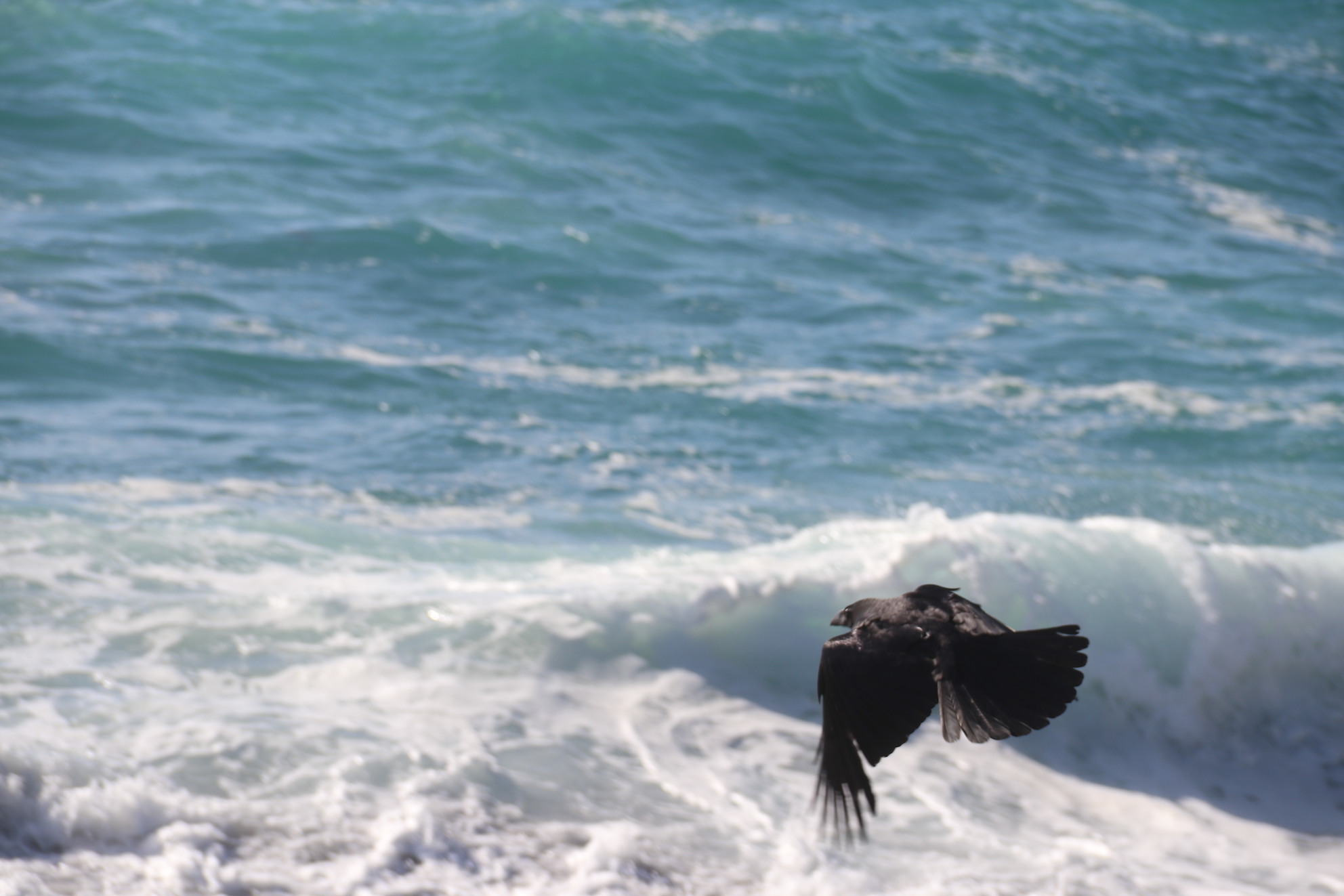 海に飛ぶ_e0023517_17184030.jpg
