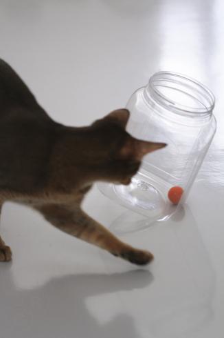 [猫的]鉄則_e0090124_00595689.jpg