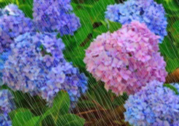 6月15日 例会 初心者講習会10日目_b0337729_10095037.jpg