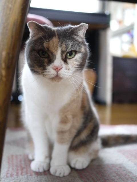 猫のお留守番 マミちゃん編。_a0143140_23151249.jpg
