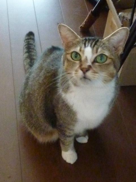 猫のお留守番 ムーちゃん編。_a0143140_23252404.jpg