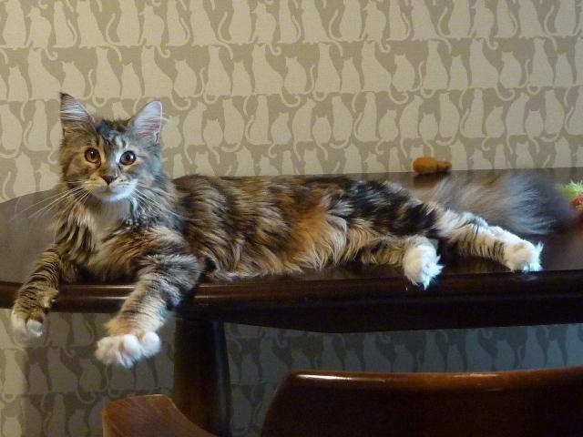 猫のお預かり 天ちゃん麦くん茶くん〇くんAoiちゃん編。_a0143140_23373649.jpg