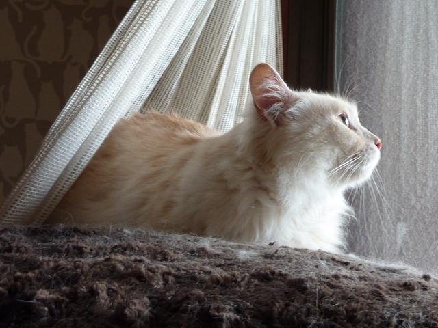 猫のお預かり 天ちゃん麦くん茶くん〇くんAoiちゃん編。_a0143140_23374583.jpg