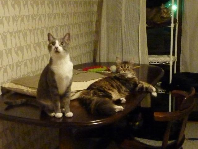 猫のお預かり 天ちゃん麦くん茶くん〇くんAoiちゃん編。_a0143140_23381078.jpg