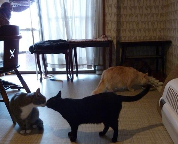 猫のお預かり 天ちゃん麦くん茶くん〇くんAoiちゃん編。_a0143140_23383590.jpg