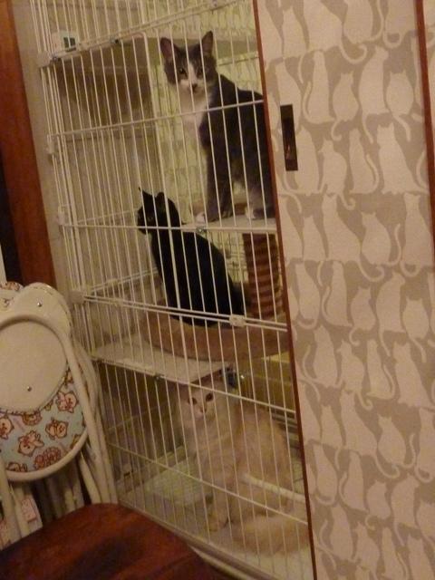 猫のお預かり 天ちゃん麦くん茶くん〇くんAoiちゃん編。_a0143140_23391061.jpg