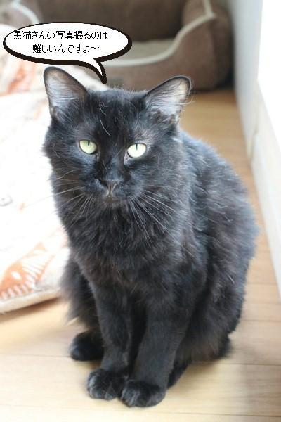 あれ、写真が撮れる黒猫さん_e0151545_20383408.jpg
