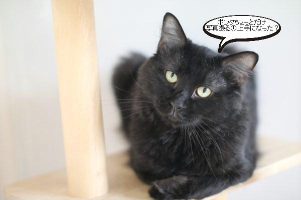 あれ、写真が撮れる黒猫さん_e0151545_20384879.jpg