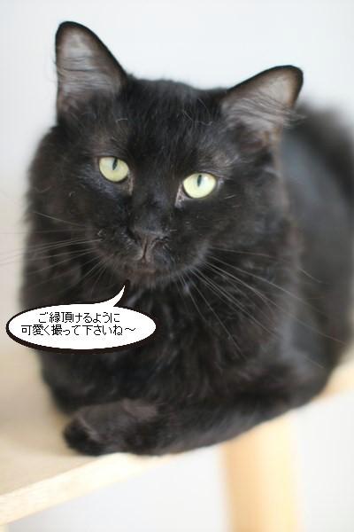 あれ、写真が撮れる黒猫さん_e0151545_20390272.jpg