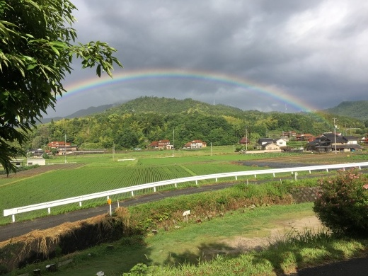 『パーフェクトな今朝の虹』&『裏山のスモークツリーは今』_c0334574_19263910.jpg