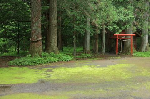 六月の早池峯神社(緑の季節到来)_f0075075_14302883.jpg
