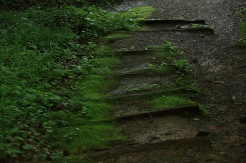 六月の早池峯神社(緑の季節到来)_f0075075_14323120.jpg