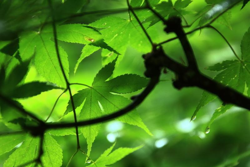 六月の早池峯神社(緑の季節到来)_f0075075_14334232.jpg