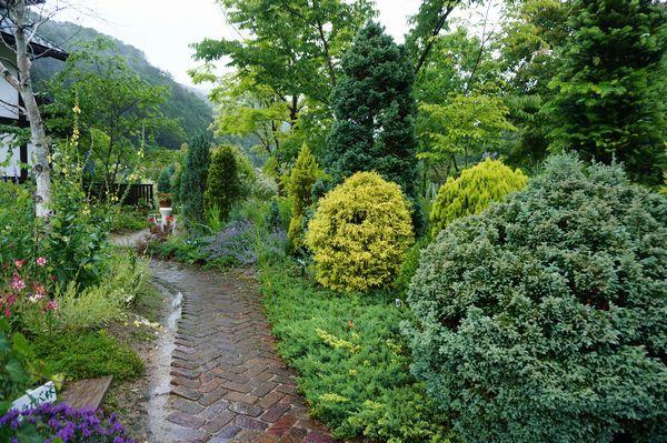 雨に濡れた庭は美しい_e0365880_09154762.jpg