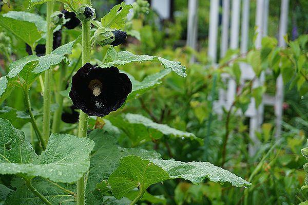 雨に濡れた庭は美しい_e0365880_09155904.jpg