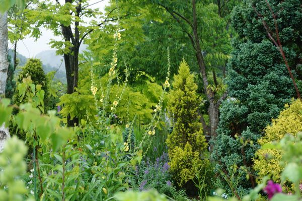 雨に濡れた庭は美しい_e0365880_09160749.jpg