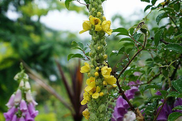 雨に濡れた庭は美しい_e0365880_09170465.jpg