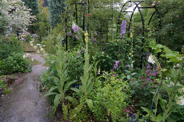 雨に濡れた庭は美しい_e0365880_09172581.jpg