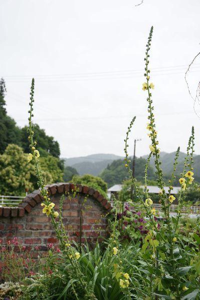 雨に濡れた庭は美しい_e0365880_09173874.jpg