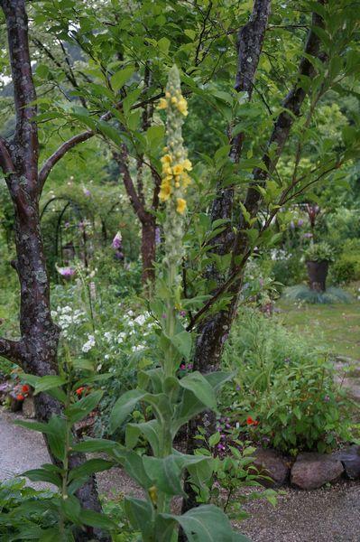 雨に濡れた庭は美しい_e0365880_09175138.jpg